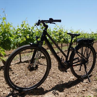 Les Domaines Viticoles des Alpilles à vélo