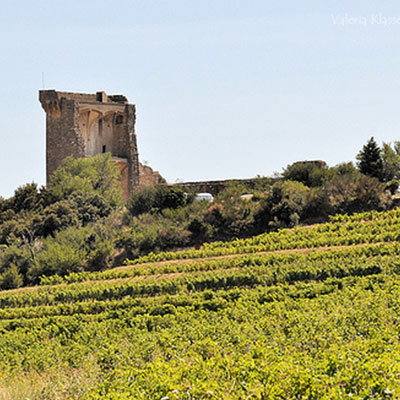 In Chateauneuf du Pape