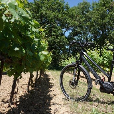 Les vignobles des Côtes du Rhône
