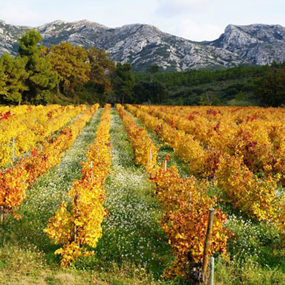 The Alpilles and The Luberon